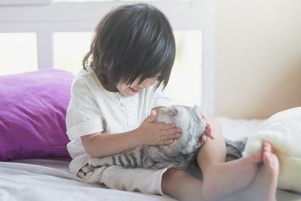 猫が甘えてくるのはどんな時?6つの心理