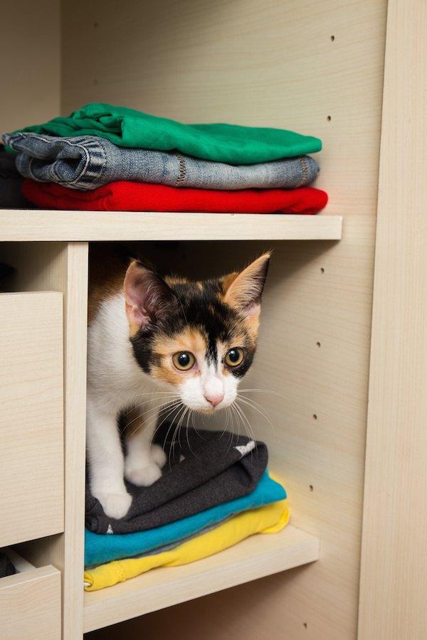 クローゼット型の猫トイレおすすめ人気ランキング8選
