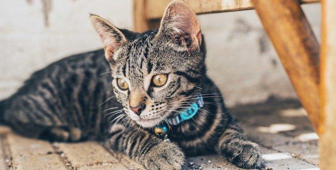 新入り猫が先住猫を追いかける!理由や対策の仕方を紹介