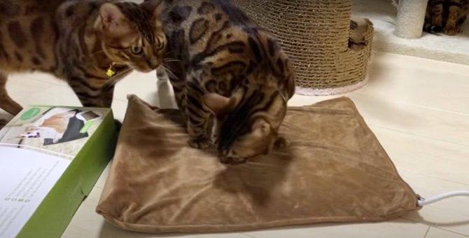 飼い主さんからホットカーペットをプレゼントされた猫ちゃんたちの反応とは?