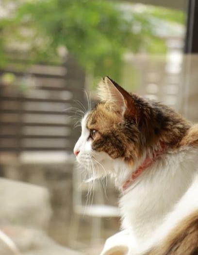 猫は自分の住む家をどのように理解しているの?