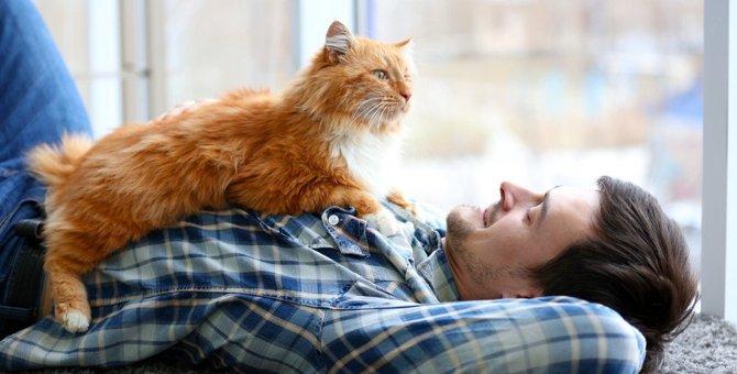 猫が飛びかかってくるのはどうして?5つの心理