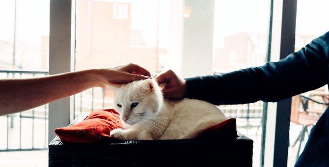 猫好きの異性と出会える婚活!ねこんかつのおすすめと評判9選
