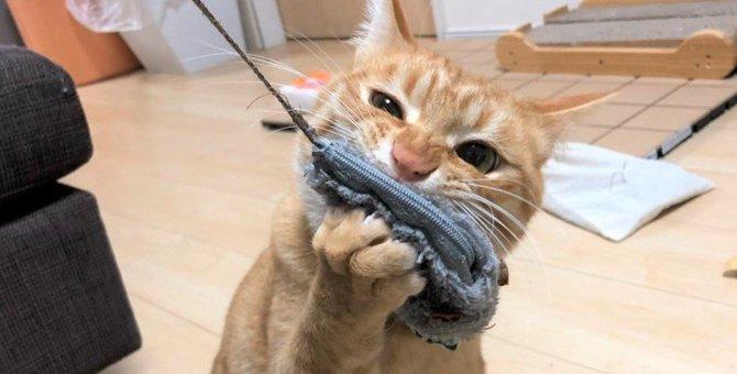いちばん最後まで捕まらなかった野良子猫が新しい家族に!