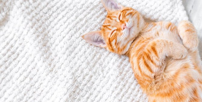 猫の皮膚病について。症状や原因、対策や治療法など