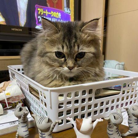猫が飼い主のことを『残念だなぁ』と思っている時の行動5選