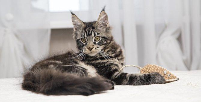 猫の聴覚は驚きの能力!そのメカニズムとは