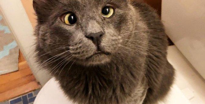 生まれつき斜視を持った猫は、その事によって運命の出会いを遂げる…