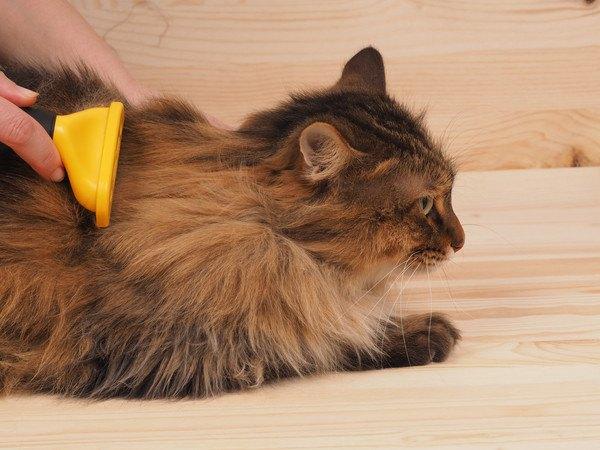 猫にファーミネーターのやりすぎは注意!正しいケア仕方