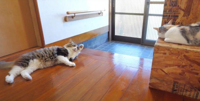 だいすきな姉猫ちゃんの横でお昼寝する猫ちゃんがかわいい♡