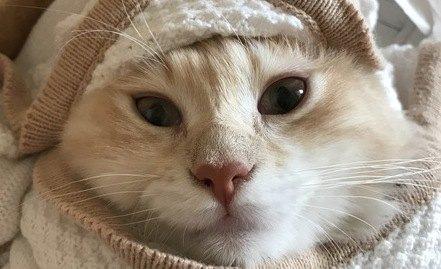 猫が『寒がっている時』の仕草や行動4つ