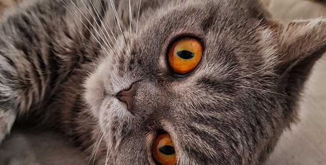 猫が邪魔されたくないと思う4つの行動