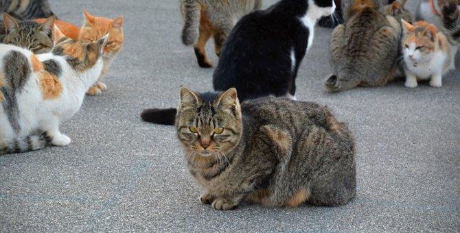 """猫好きなら1度は行ってみたい、""""猫島"""""""
