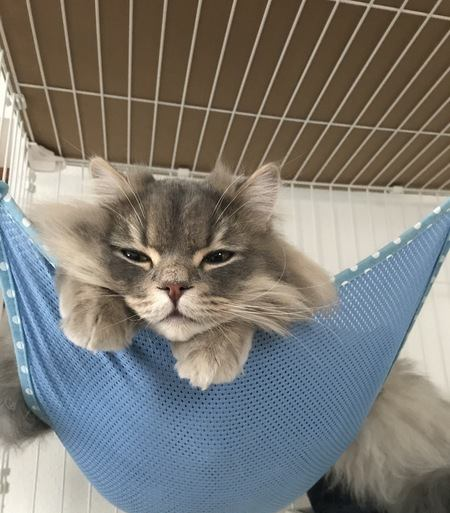 ケージを嫌がる猫に慣れさせる方法4つ