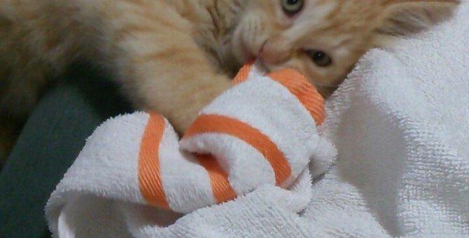 やんちゃな猫との攻防戦!お互い幸せにいられるようにできる3つの作戦