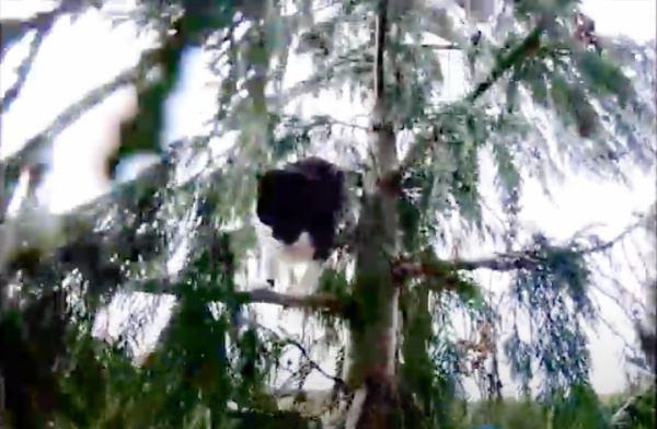 スリル満点?高さ30mの木で猫と救助隊員が追いかけっこ!?