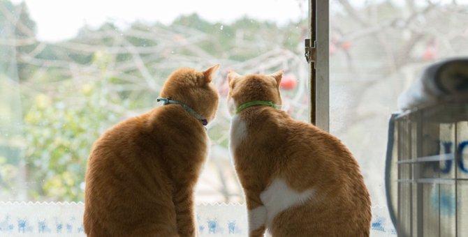 猫が欲しいと思ったときに里親になる方法