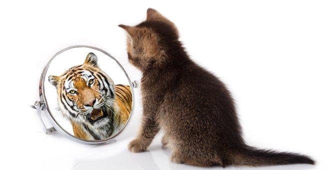 猫と犬では強い方はどっちか 能力比較7本勝負!
