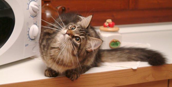 猫にあずきを食べさせても大丈夫?効果と注意点
