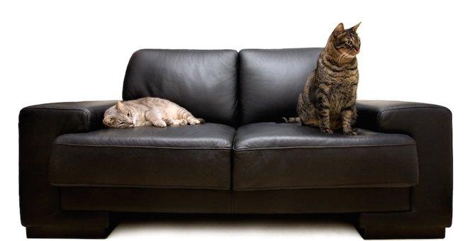 猫がソファで爪とぎ・粗相をする理由と対処法