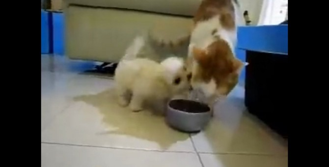 犬「遊ぼ!遊ぼ!遊ぼ!」猫「…うるさいにゃあ」