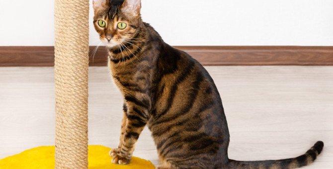 猫が『爪とぎ』をしないときの理由5つと対処法