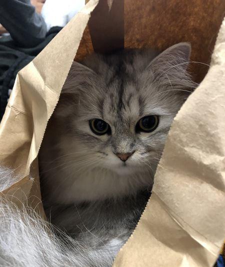 猫が紙袋を好きな理由3つ