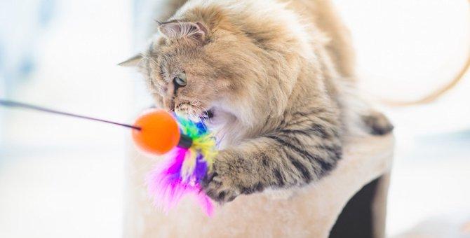愛猫が夢中になったマタタビなしの「猫じゃらし」ベスト3!