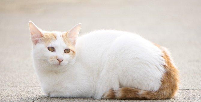 猫が『前足をしまって座る』ときの気持ち3選