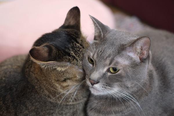 猫にとって『お節介』なこと5つ