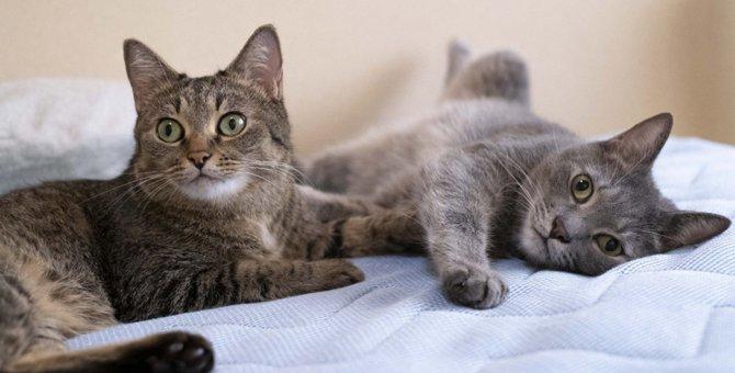 距離のある『同居猫』に仲良くなってもらう方法3つ