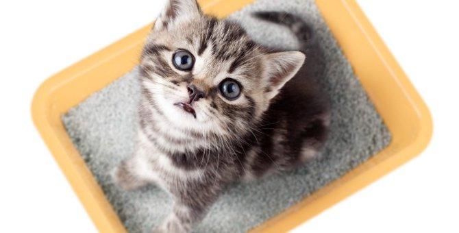 猫のおしっこが出ないときに考えられる原因4つ