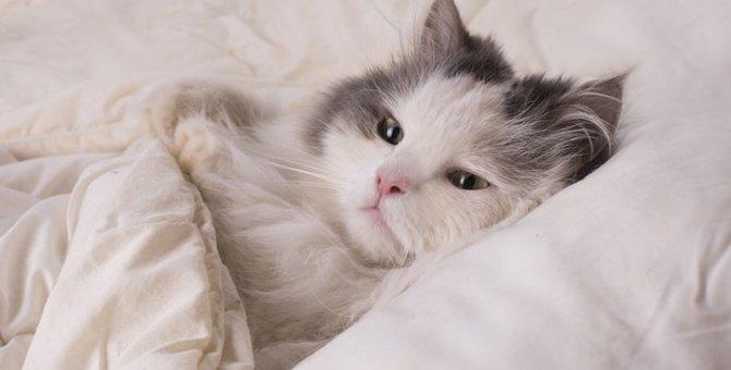 猫が添い寝してくる時の理由と5つの気持ち