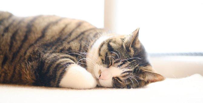 『孤独を感じやすい猫』に共通すること5つ!寂しさをケアする方法とは?