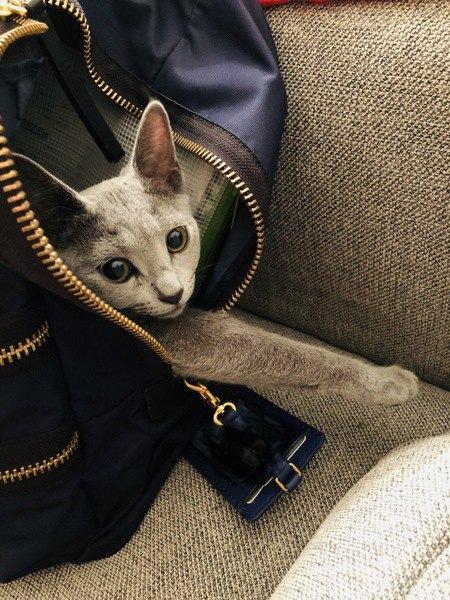 猫のキャリーバッグの種類と選び方のポイント