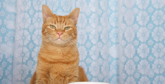 猫の餌皿を選ぶポイント!食べやすいお皿を選んであげよう!