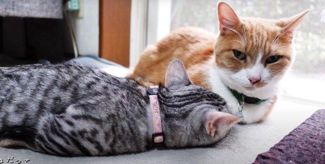 1対1で見えた猫さんたちの関係性とは?