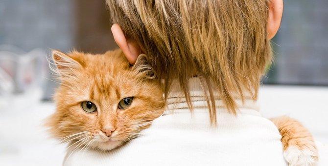 備えあれば憂いなし!あると便利な猫の防災グッズ15選