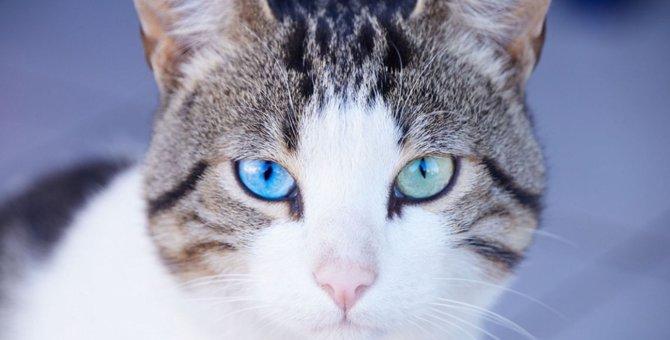 猫の視力はどれぐらい?見える範囲や色まで