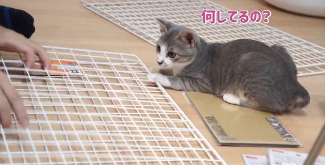 これは便利!子猫用のケージは100均のワイヤーネットで作れる♪