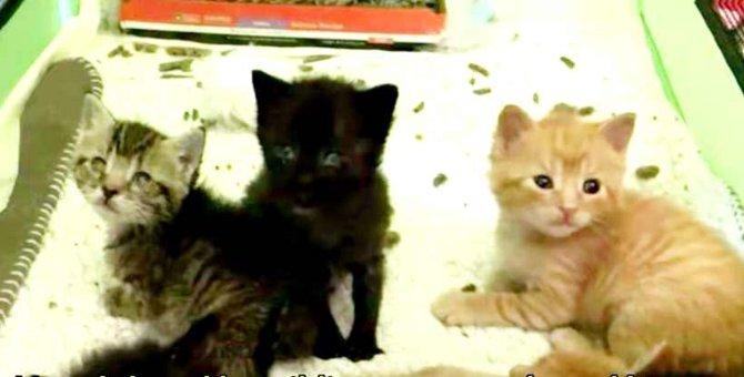 雨に濡れて弱った子猫たちを保護…快気祝いで訪れた場所とは?
