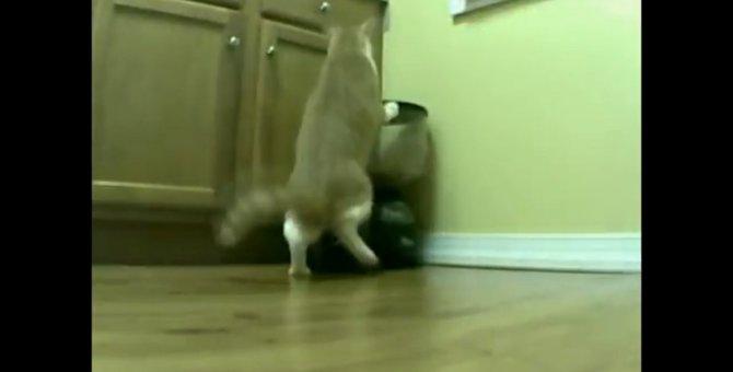 自動を手動に!自動給餌機のトリックに気がついた猫ちゃん