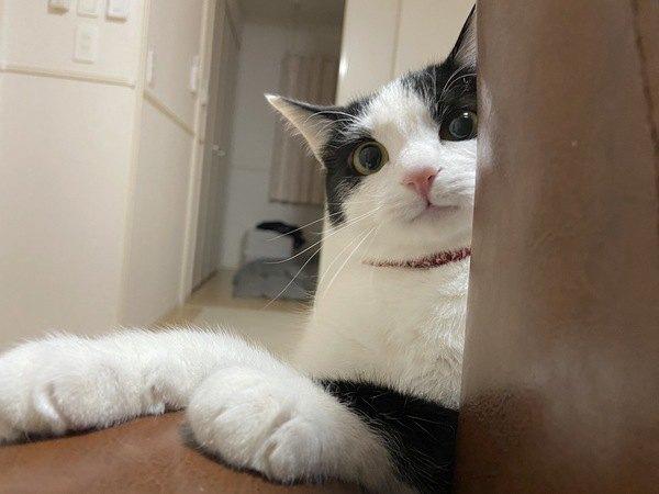 野良猫に懐かれやすい人の特徴4つ