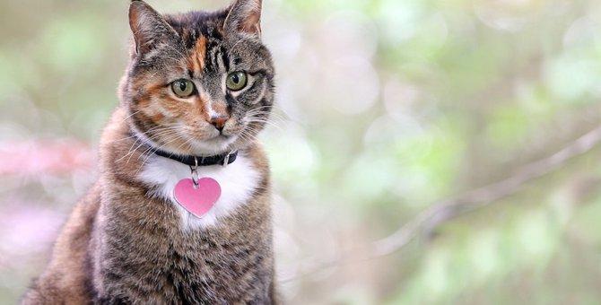 メスの猫に名前をつける時参考にしたい8つの決め方