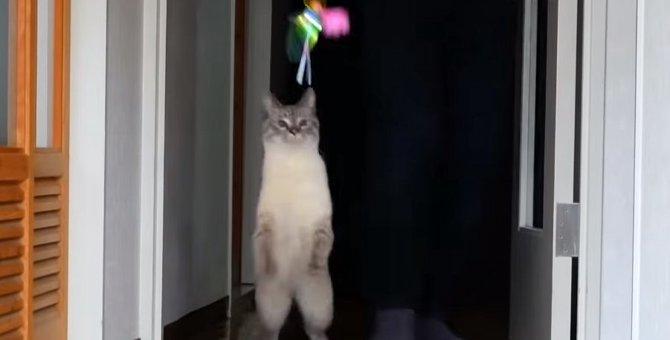 新しいおもちゃに大興奮!頭脳明晰な猫ちゃんは分析も得意