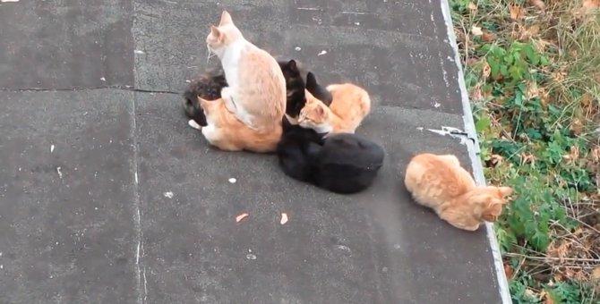 「よっこいしょ」猫を座布団にする猫