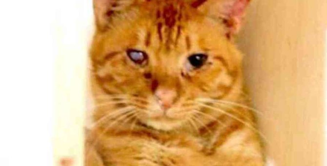 飼育崩壊で片目を失った猫…保護され輝きを取り戻す!
