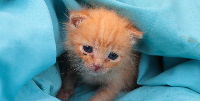 猫を引き取るには?殺処分されてしまう猫を家に連れて帰る方法。