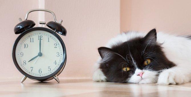 猫が毎朝飼い主を起こしに来る理由と対処法