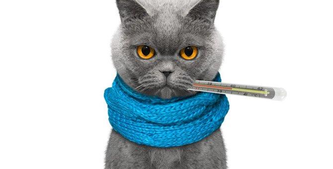 猫用の体温計おすすめ3選!正しい体温の測り方